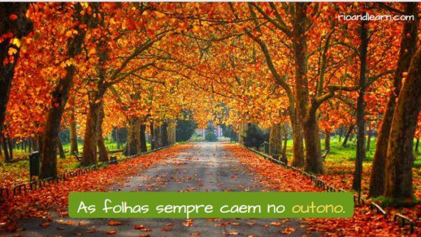 Estações do Ano em Português. As folhas caem no outono.