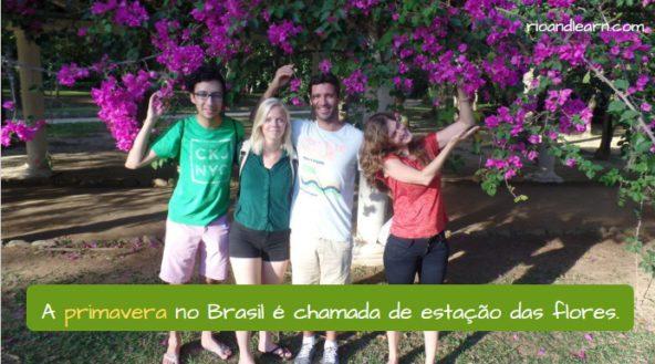 Estações do Ano em Português. A Primavera no Brasil é chamada de estação das flores