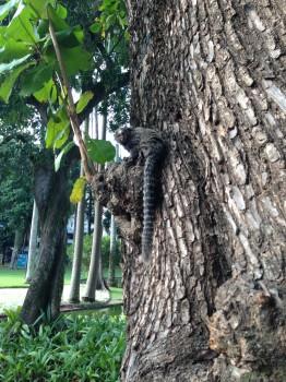 Parque do Catete. Pequeno mico em uma árvore no Parque do Catete. Learn Portuguese and discover Rio de Janeiro with RioLIVE! Activities by Rio&Learn Portuguese School.