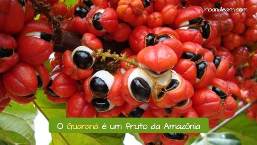 What is Guarana. O Guaraná é um fruto da Amazônia.