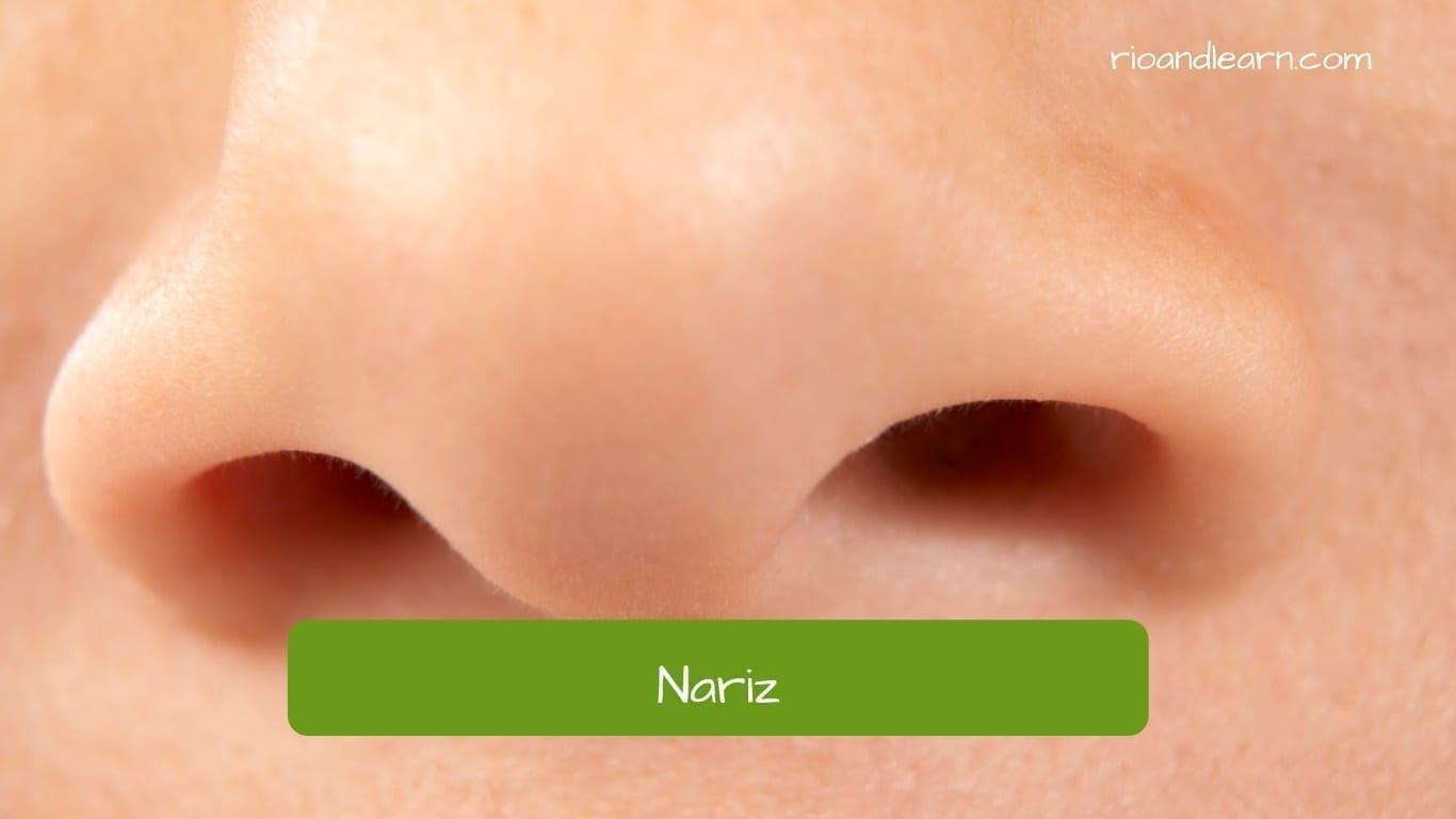 Nariz en portugués: nariz