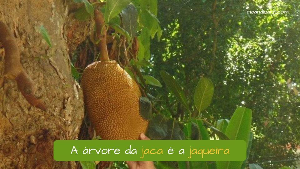 Ejemplo de árbol en portugués: A árvore da jaca é a jaqueira.