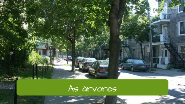 Examples of vocabulary of the city. The trees: As árvores.