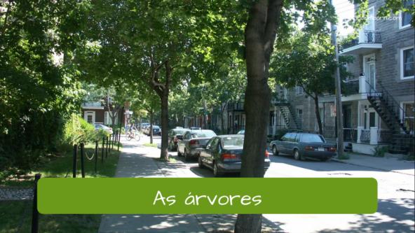 Exemplos de vocabulário da cidade: As árvores.
