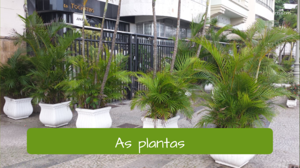 Examples of objects at the street. The plants: As plantas.