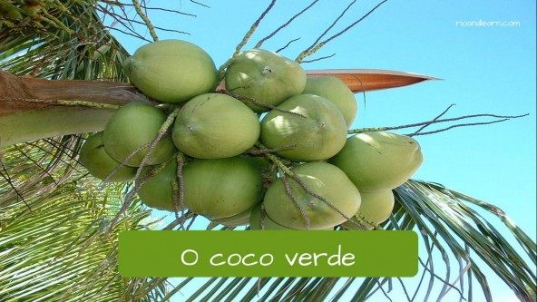 Green Coconut in Portuguese: Coco verde