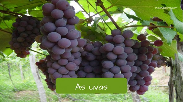 Grape in Portuguese: Uva