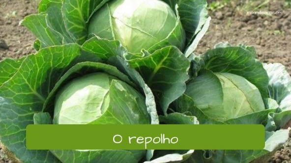 Vegetables in Portuguese: repolho - cabbage