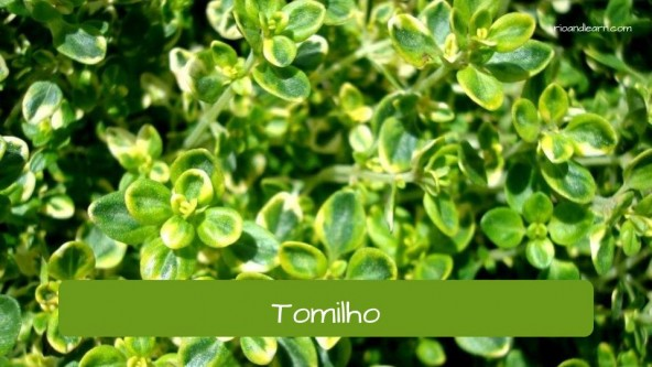 Spices in Portuguese. Thyme: Tomilho.