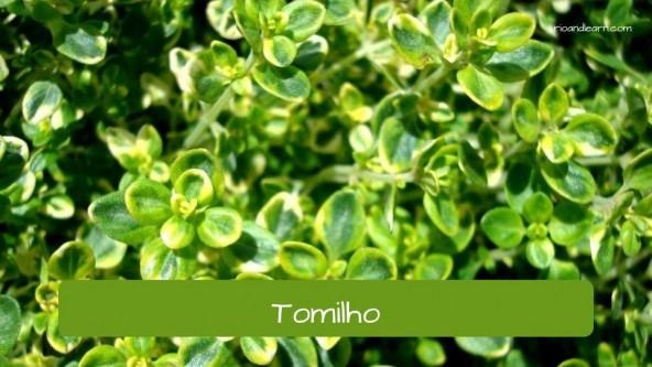 Tempos em Português: Tomilho.