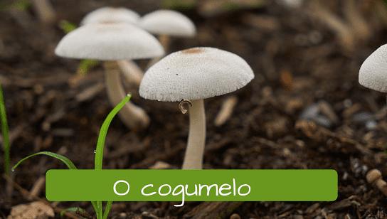 Seta en portugués: o cogumelo.