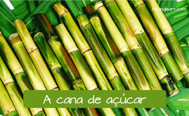 La caña de azúcar en portugués: A cana de açúcar.