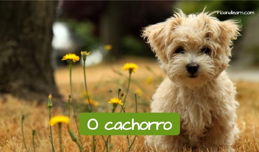 Animales de compañía más comunes en Brasil: El perro. Perro entre las flores con la traducción al portugués: Cachorro.