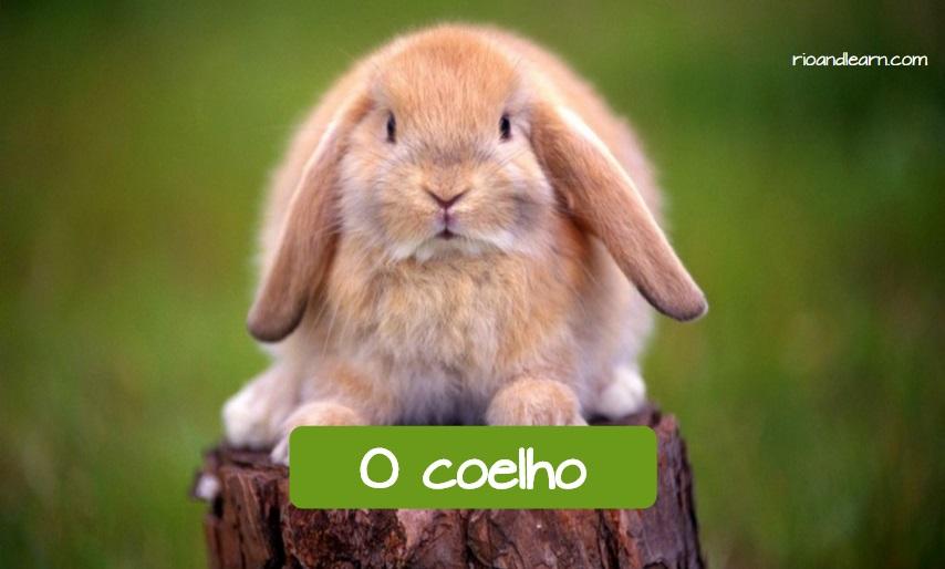 Animales domésticos más comunes en Brasil: el conejo. Conejo con su traducción al portugués.