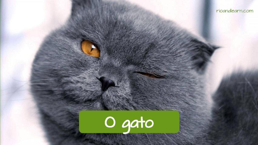 Mascotas comunes en Brasil: El gato. Gato guiñando el ojo.