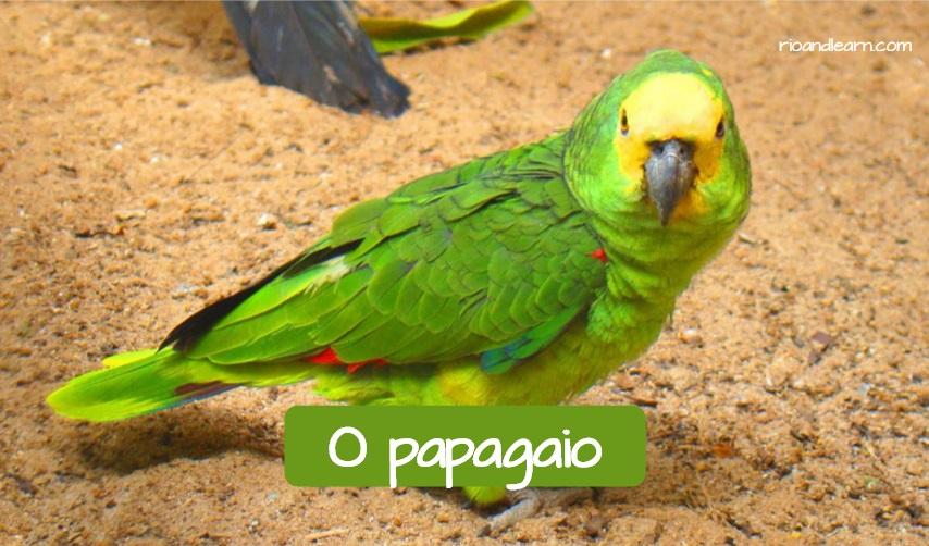 Animales domésticos más comunes en Brasil: El papagayo. Aparece la palabra papagayo en portugués, con un papagayo o loro.