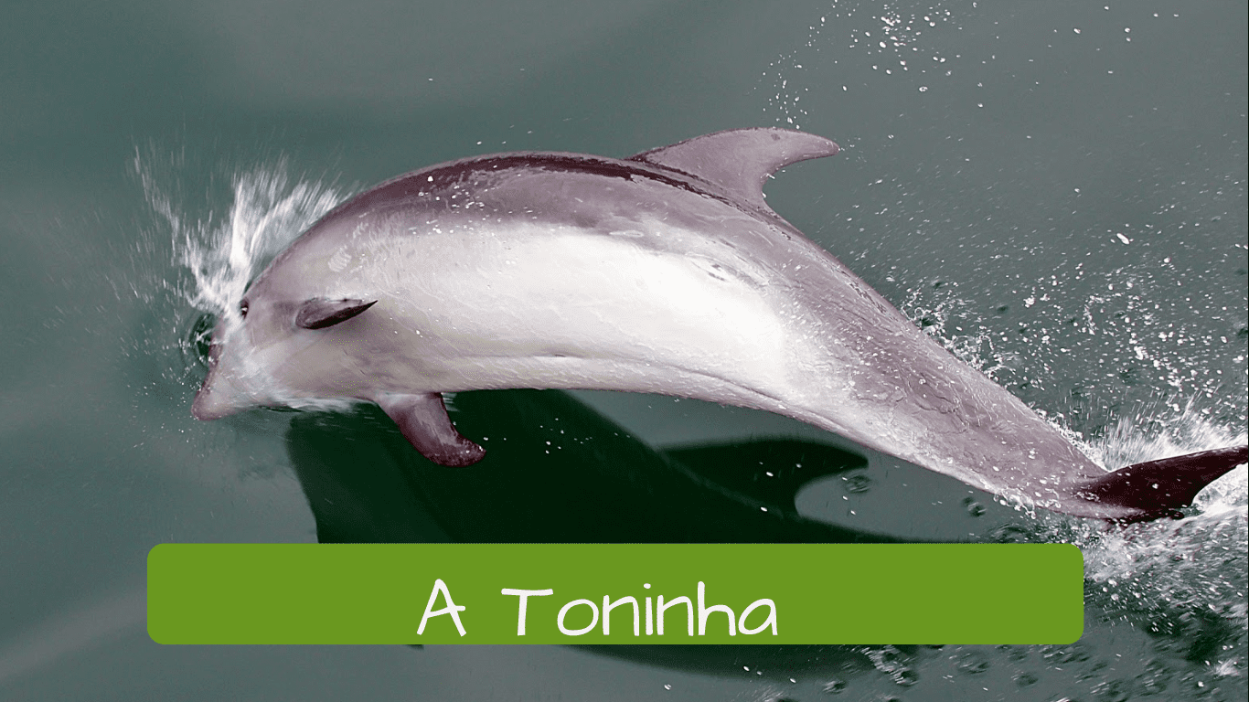 Exotic animals in Brazil.a toninha