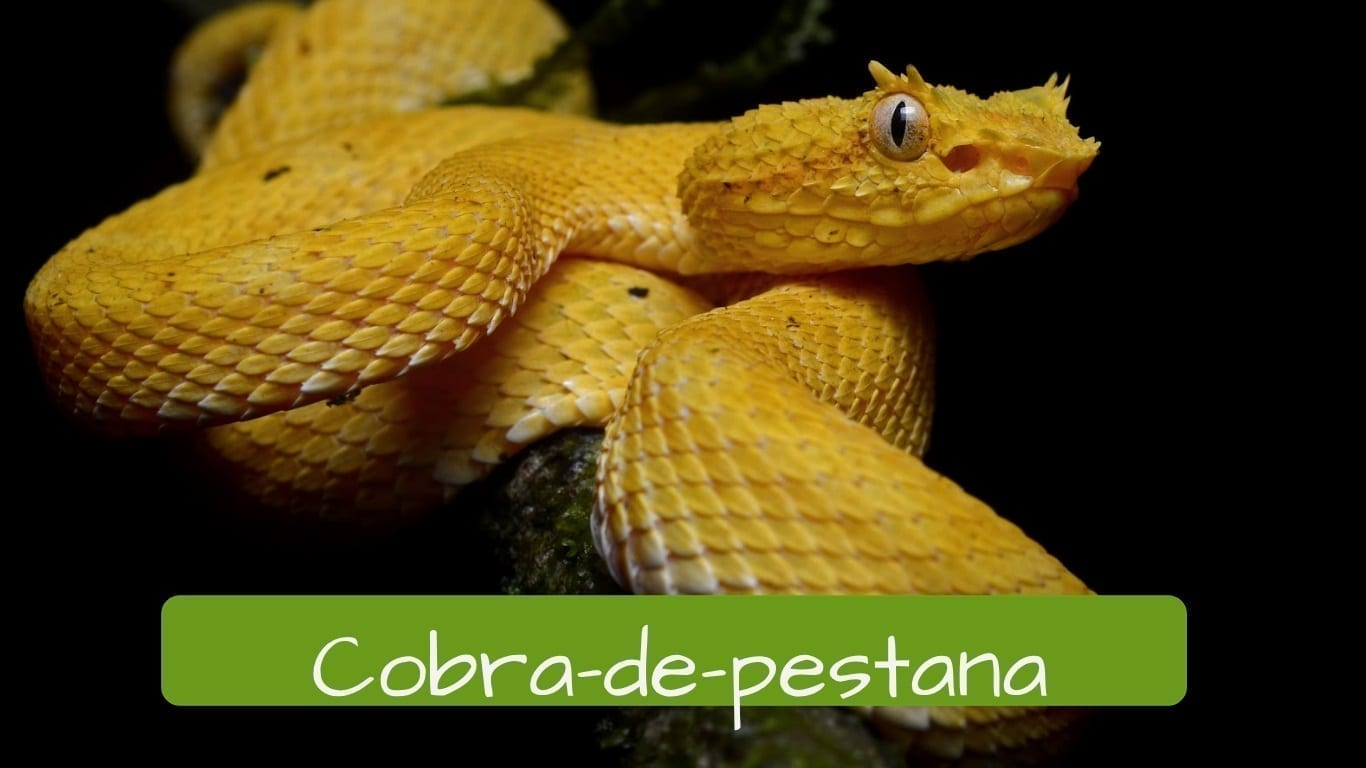 exotic animals in Brazil cobra-de-pestana