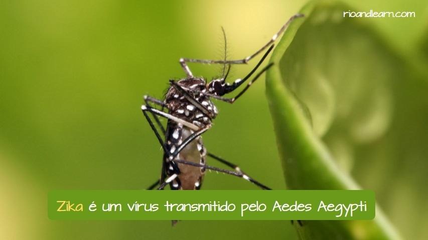 Preguntas y respuestas sobre el Virus Zika. El Zika es un virus transmitido por el mosquito Aedes Aegypti. Traducción al portugués: Zika é um vírus transmitido pelo Aedes Aegypti.