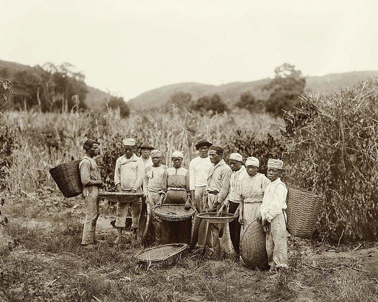 Esclavos en una plantación de café en Brasil en 1882.
