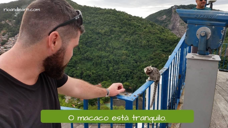 O macaco está tranquilo. Tranquilo em Português.