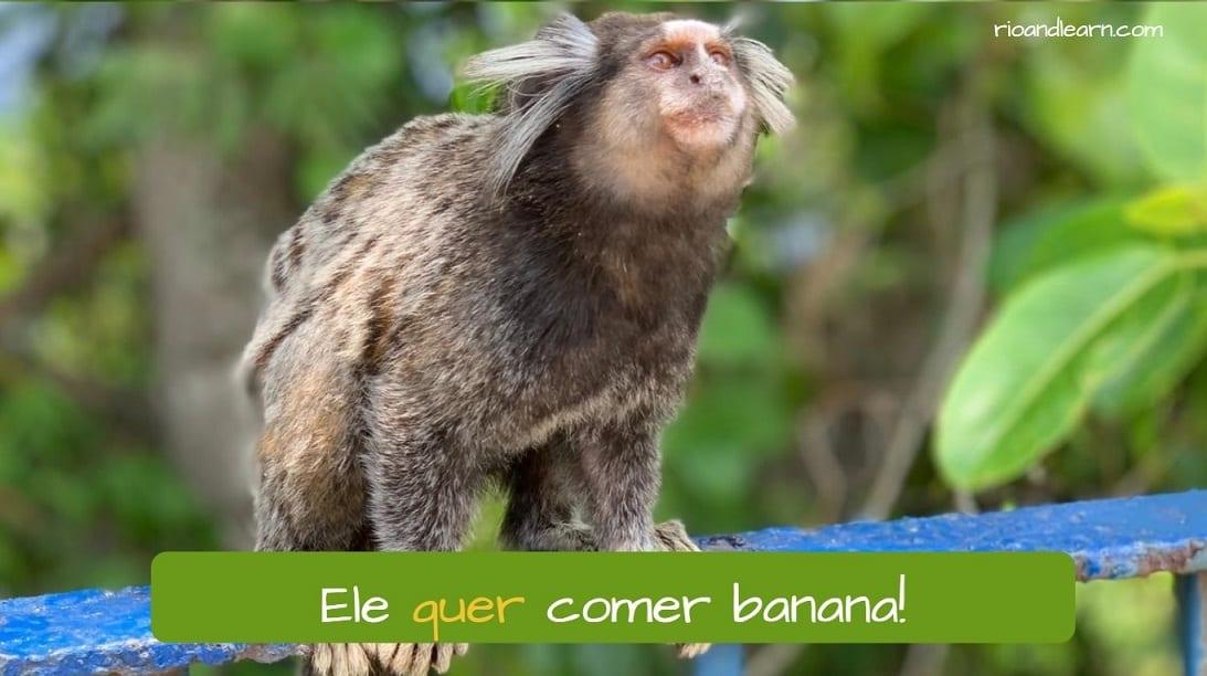 Example about Regência Verbal: Ele quer comer banana!