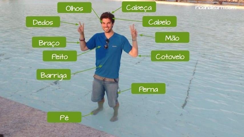 Partes do corpo em português. Cabeça, cabelo, mão, cotevelo, pernas, pé, barriga, peito, braço, olhos.