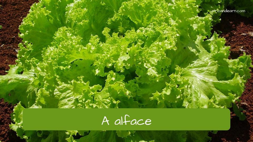 Las verduras en portugués. Lechuga en portugués: alface.